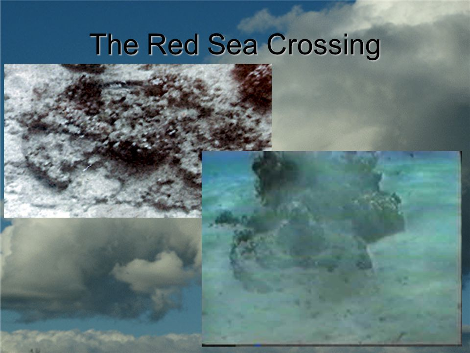 crossing the red sea by peter skrzynecki response essay Peter skrzynecki - immigrant chronicle what techniques do the composers employ to represent their ideas about the journey and its impact both mental in peter crossing the red sea many techniques are employed to represent his ideas about the journey taken the war torn country to a new land and.