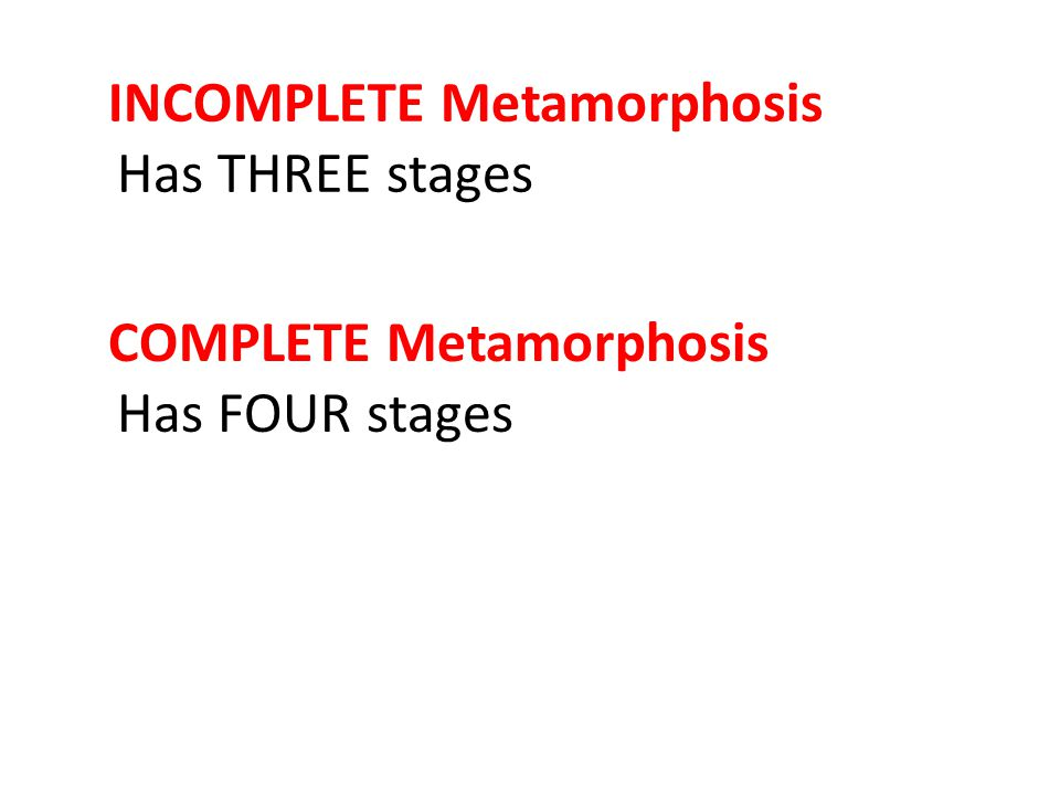 INCOMPLETE Metamorphosis Has THREE stages COMPLETE Metamorphosis Has FOUR stages