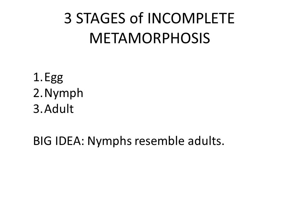 3 STAGES of INCOMPLETE METAMORPHOSIS 1.Egg 2.Nymph 3.Adult BIG IDEA: Nymphs resemble adults.
