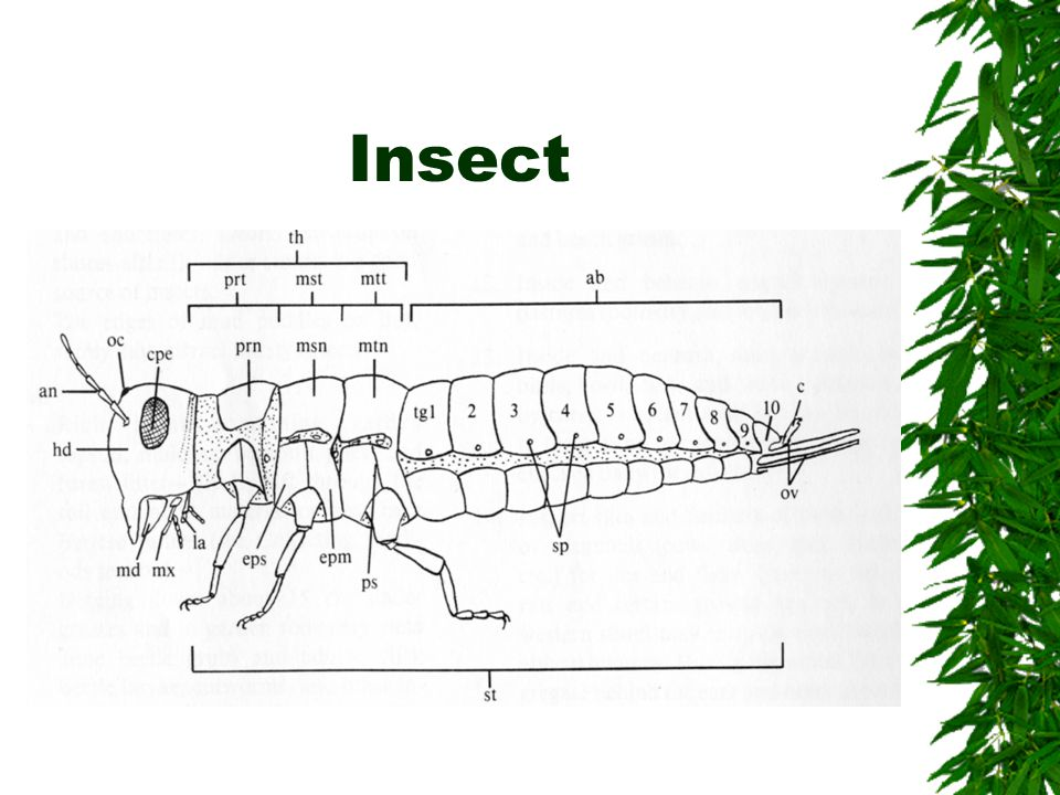 Insect  Insect Body Parts  ab - abdomen  an - antenna