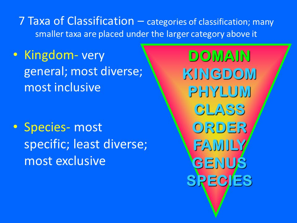 importance of classification