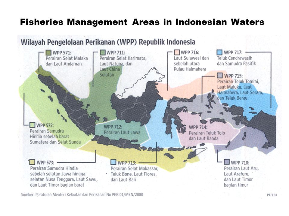 By Wudianto And Bambang Sumiono 2010 Research Center For Capture Fisheries Agency For Marine And Fisheries Research Presented In Meeting On Coral Triangle Ppt Download
