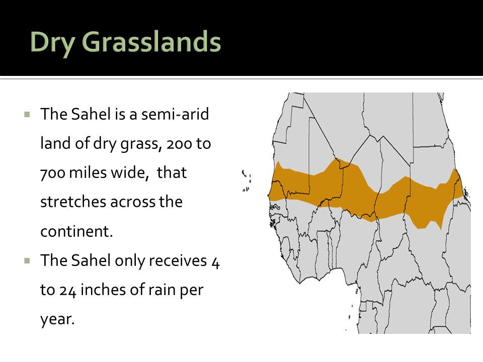  The Sahel is a semi-arid land of dry grass, 200 to 700 miles wide, that stretches across the continent.