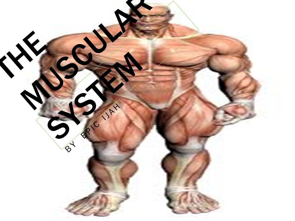The Muscular System By Epic Ijah Introduction You Will Be Seeing