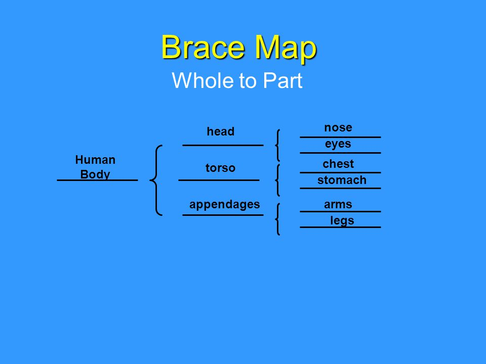 Brace Map Whole to Part Human Body legs arms chest stomach eyes nose appendages torso head