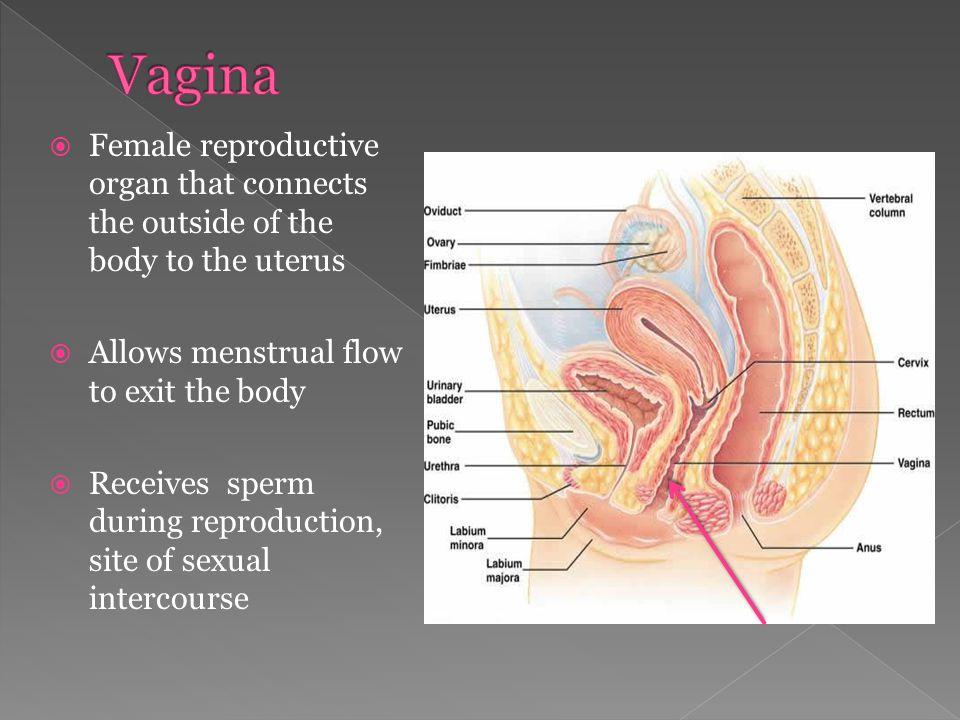 Girls masturbating together squirting