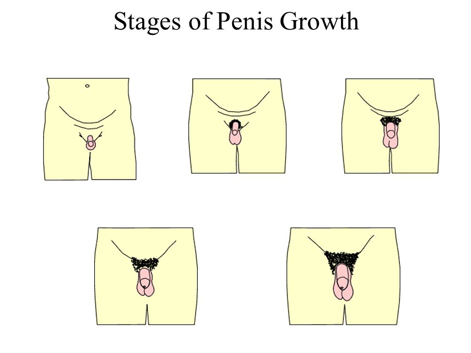 Penis growth in boys