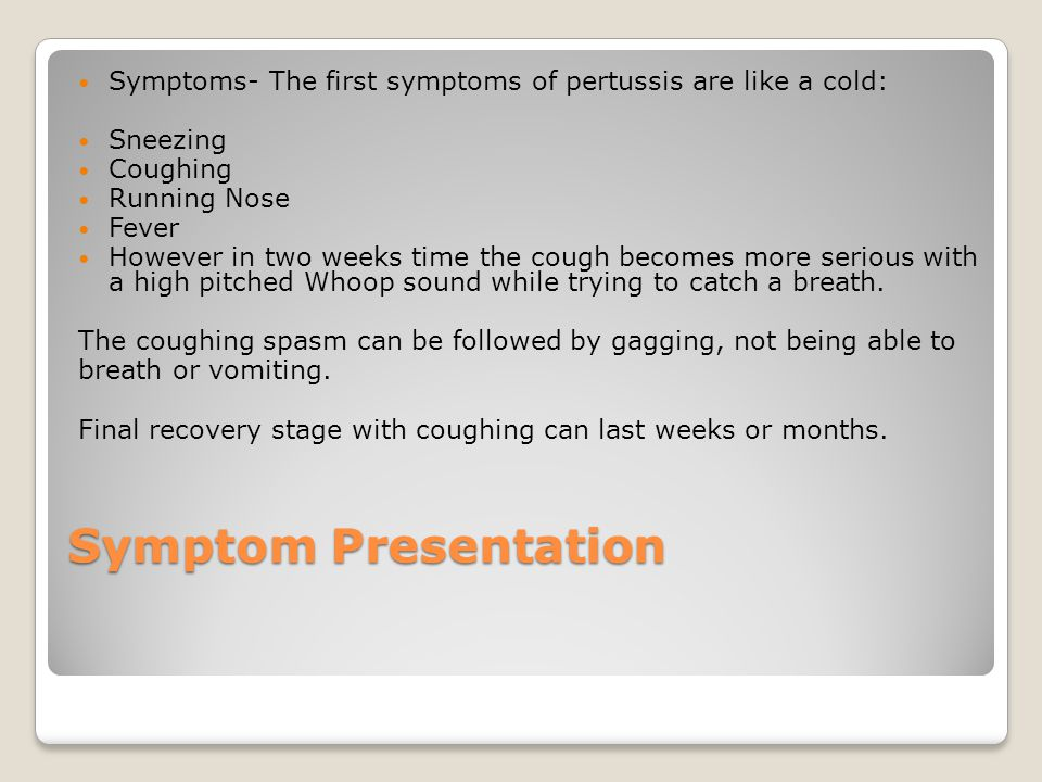 Symptom Presentation Symptoms- The first symptoms of pertussis are like a cold: Sneezing Coughing Running Nose Fever However in two weeks time the cough becomes more serious with a high pitched Whoop sound while trying to catch a breath.
