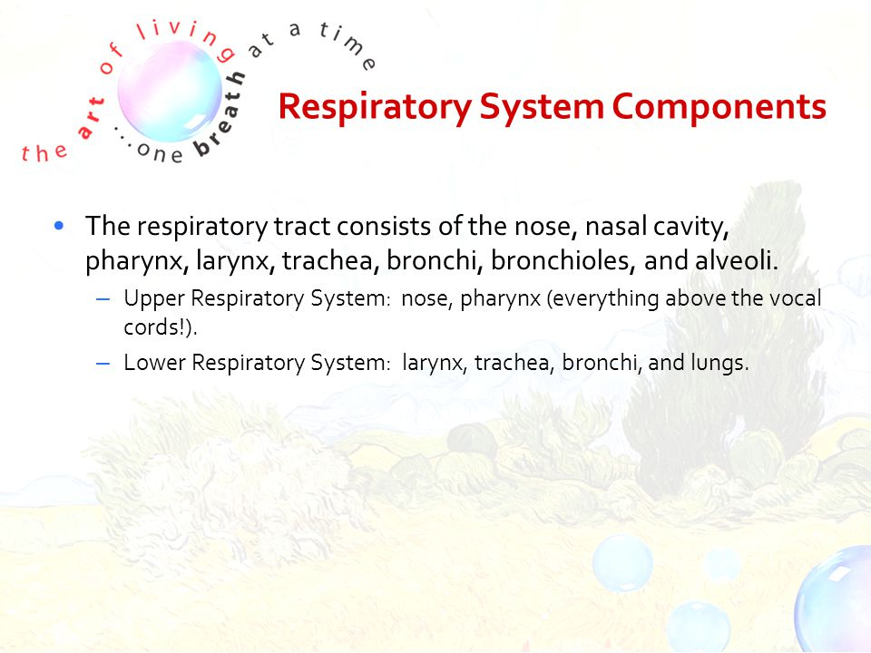 Respiratory System Components The respiratory tract consists of the nose, nasal cavity, pharynx, larynx, trachea, bronchi, bronchioles, and alveoli.