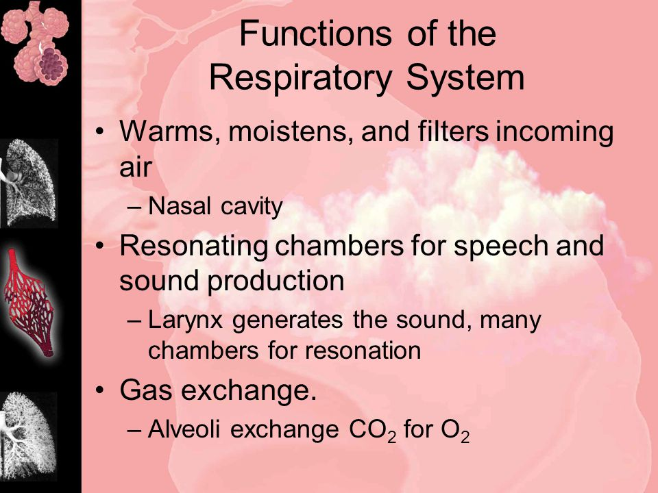 Functions of the Respiratory System Warms, moistens, and filters incoming air –Nasal cavity Resonating chambers for speech and sound production –Larynx generates the sound, many chambers for resonation Gas exchange.
