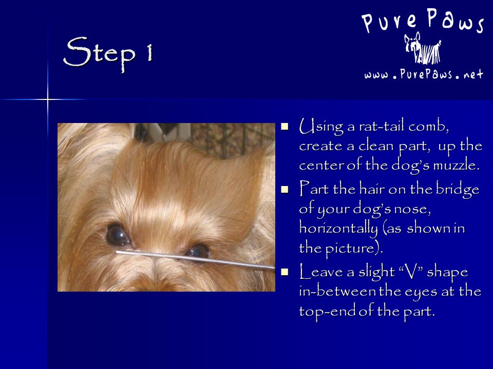 Yorkshire Terrier Top Knots Steps To Create A Beautiful Yorkie Top