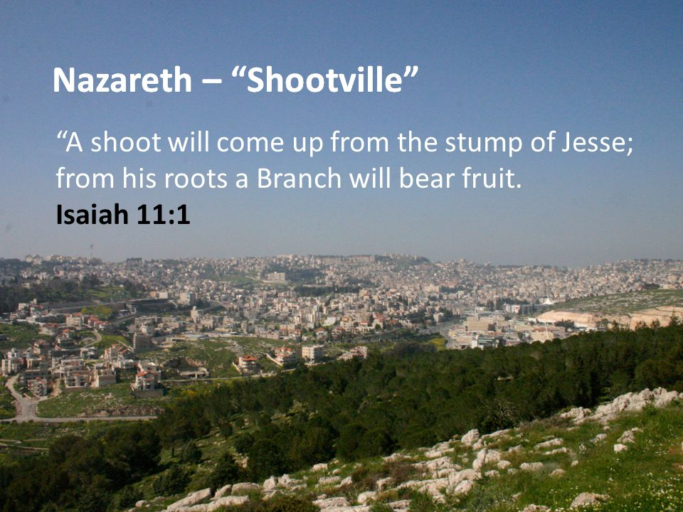 A shoot will come up from the stump of Jesse; from his roots a Branch will bear fruit. Isaiah 11:1