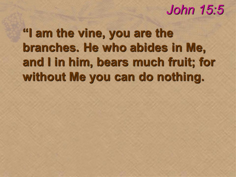 I am the vine, you are the branches.