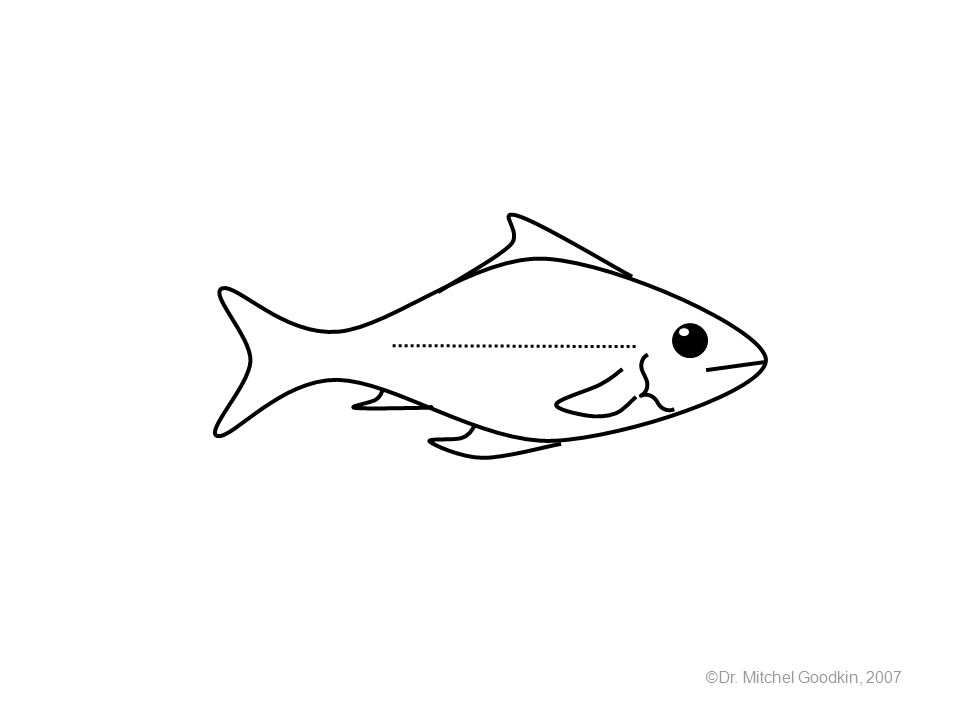 Dr Mitchel Goodkin Draw And Label The Parts Of A Fish Ppt Download