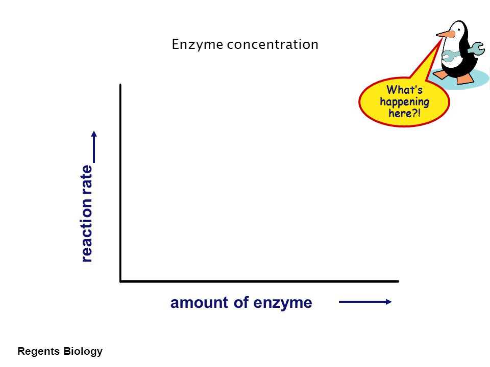 Regents Biology Enzyme concentration Effect on rates of enzyme activity –as _________________ amount of enzyme = _____________ how fast the reaction happens more enzymes = more frequently they collide with substrate