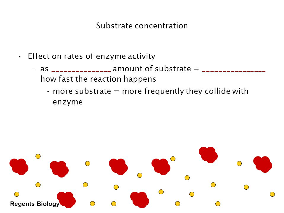 Regents Biology Enzyme concentration amount of enzyme reaction rate What's happening here !