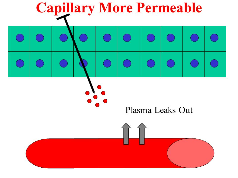 Capillary More Permeable Plasma Leaks Out