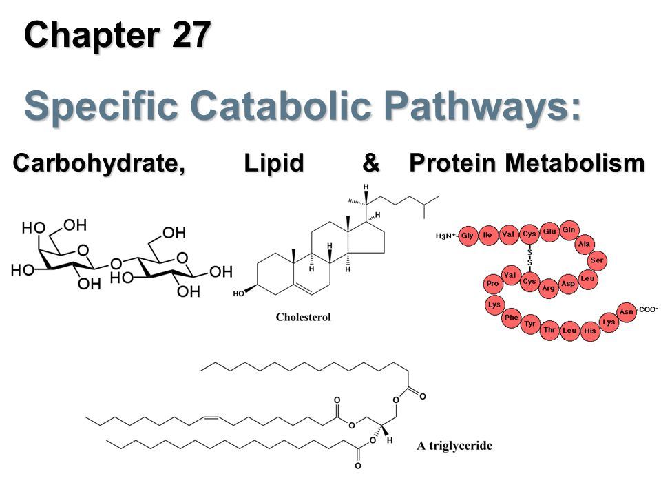 chapter 27 specific catabolic pathways carbohydrate lipid