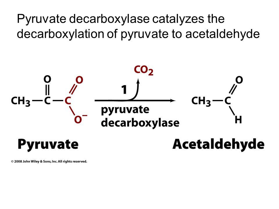 pyruvate to acetaldehyde