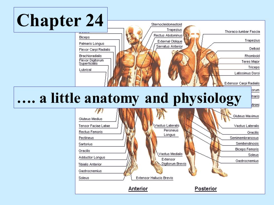 Chapter 24 …. a little anatomy and physiology. Levels of ...