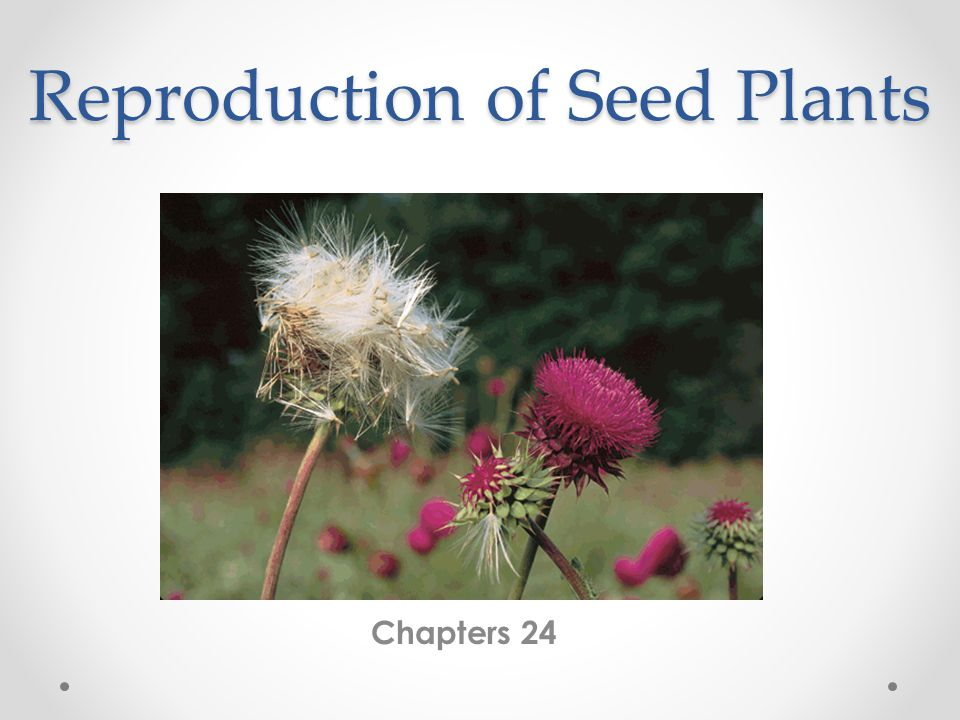 Reproduction of Seed Plants Chapters 24