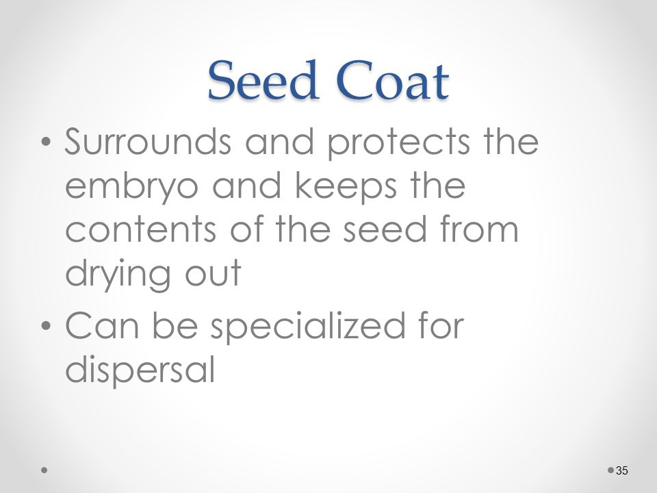 35 Seed Coat Surrounds and protects the embryo and keeps the contents of the seed from drying out Can be specialized for dispersal