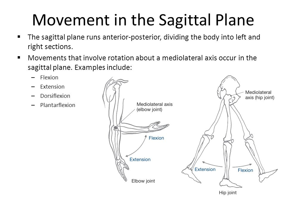 REC 3010 HUMAN MOVEMENT. THE STRUCTURE OF MUSCLE. - ppt download