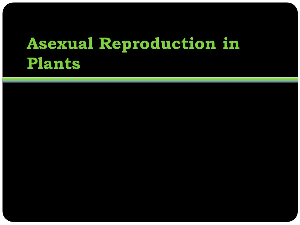 Asexual reproduction plants disadvantages of computer