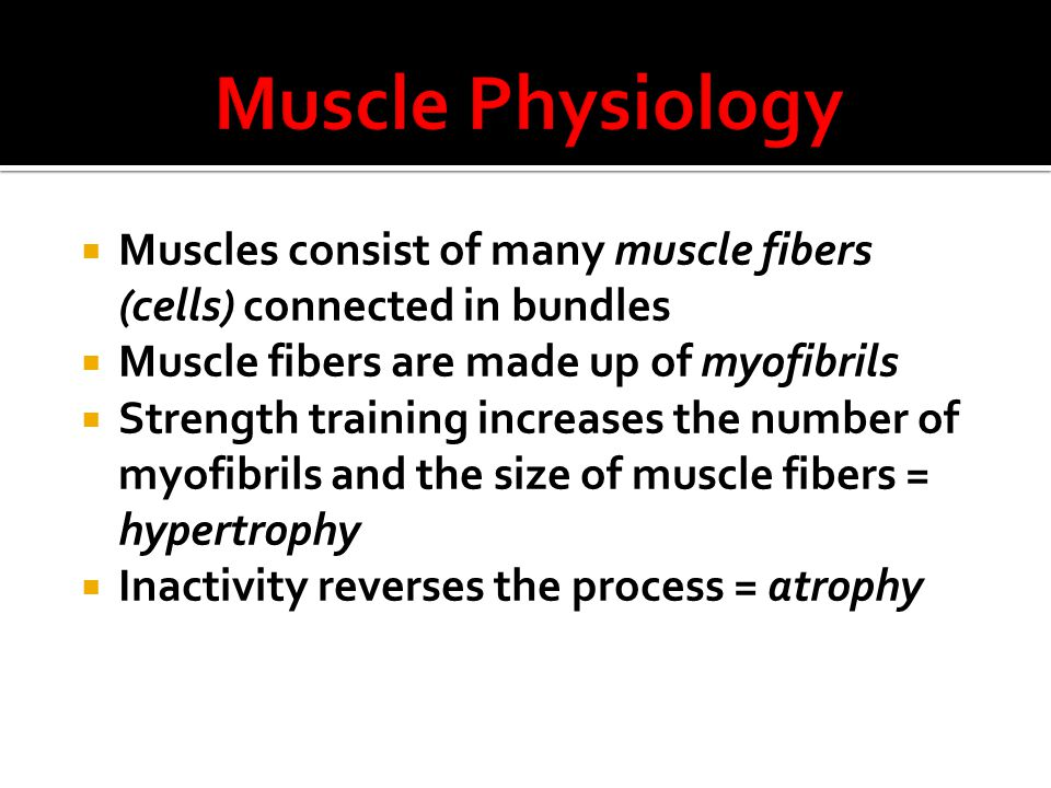  Muscles consist of many muscle fibers (cells) connected in bundles  Muscle fibers are made up of myofibrils  Strength training increases the number of myofibrils and the size of muscle fibers = hypertrophy  Inactivity reverses the process = atrophy