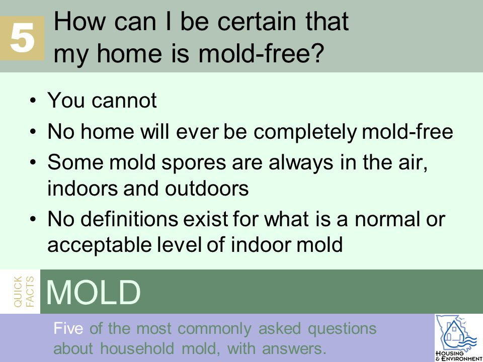 QUICK FACTS Mold Five of the most commonly asked questions