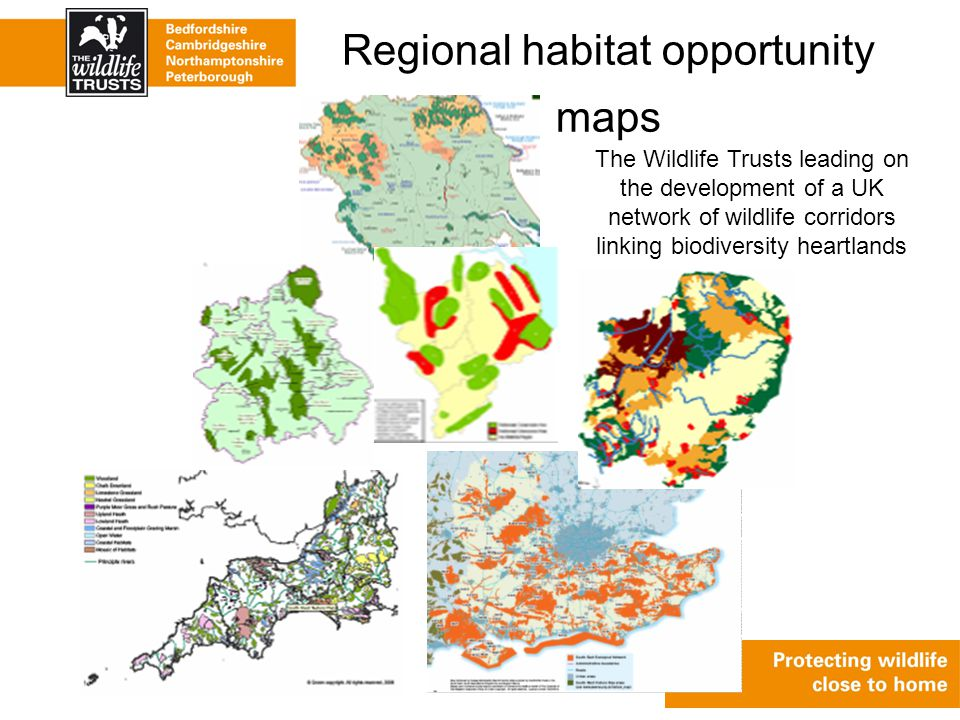 Regional habitat opportunity maps The Wildlife Trusts leading on the development of a UK network of wildlife corridors linking biodiversity heartlands