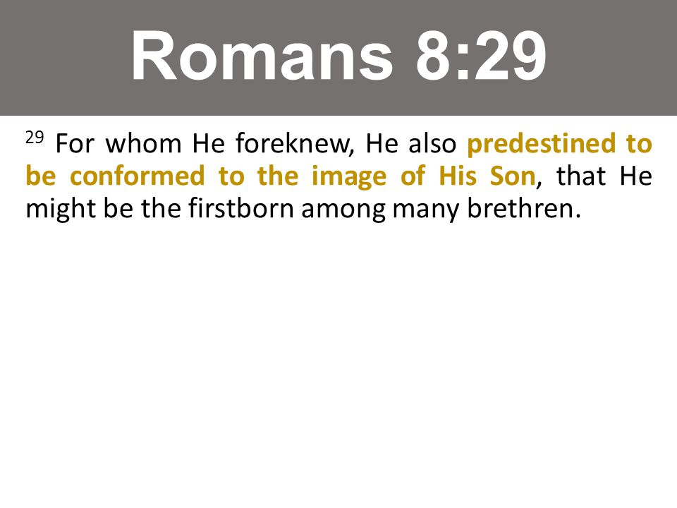 Romans 8:29 29 For whom He foreknew, He also predestined to be conformed to the image of His Son, that He might be the firstborn among many brethren.