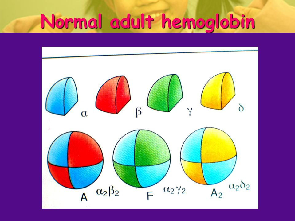 Normal adult hemoglobin