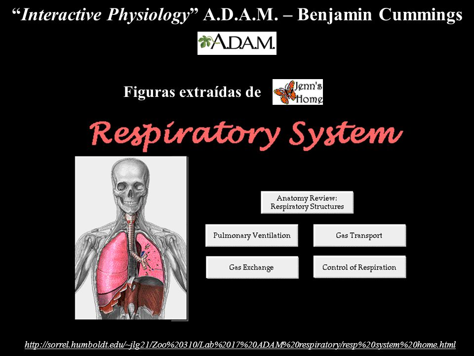 "Interactive Physiology"" A.D.A.M. – Benjamin Cummings. - ppt download"
