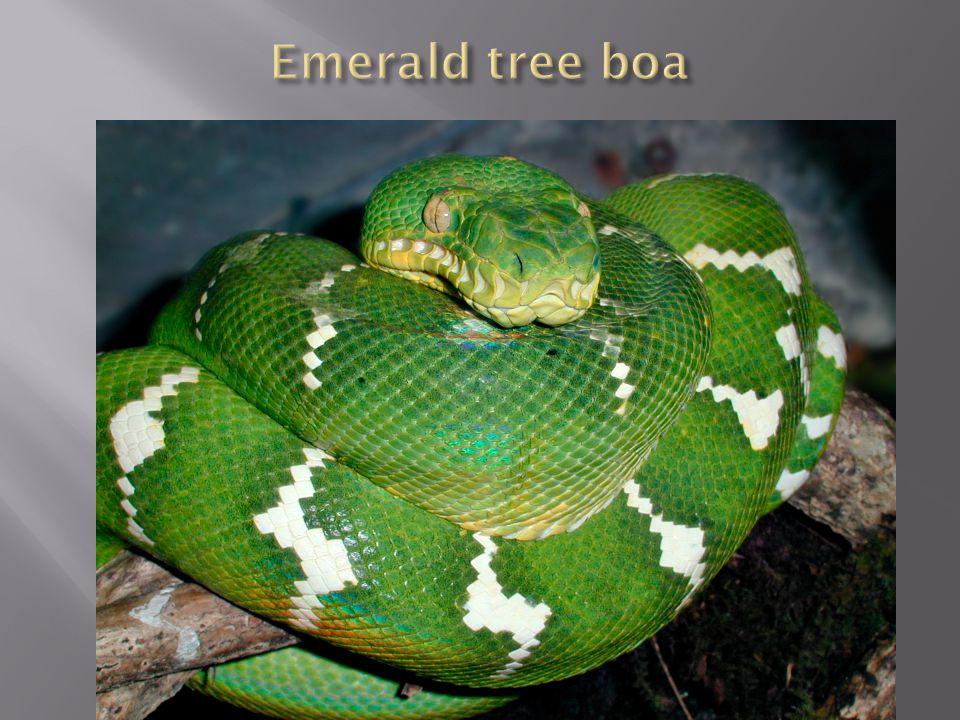 Reptiles  Taxonomy + basic biology  Snakes  Taxonomy + basic