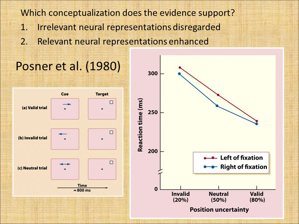 Posner et al. (1980) Which conceptualization does the evidence support.