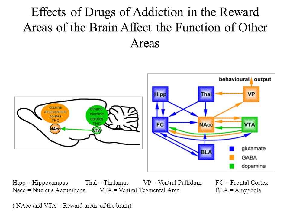 Drugs of Addiction and Alcohol Effects on the Brain By