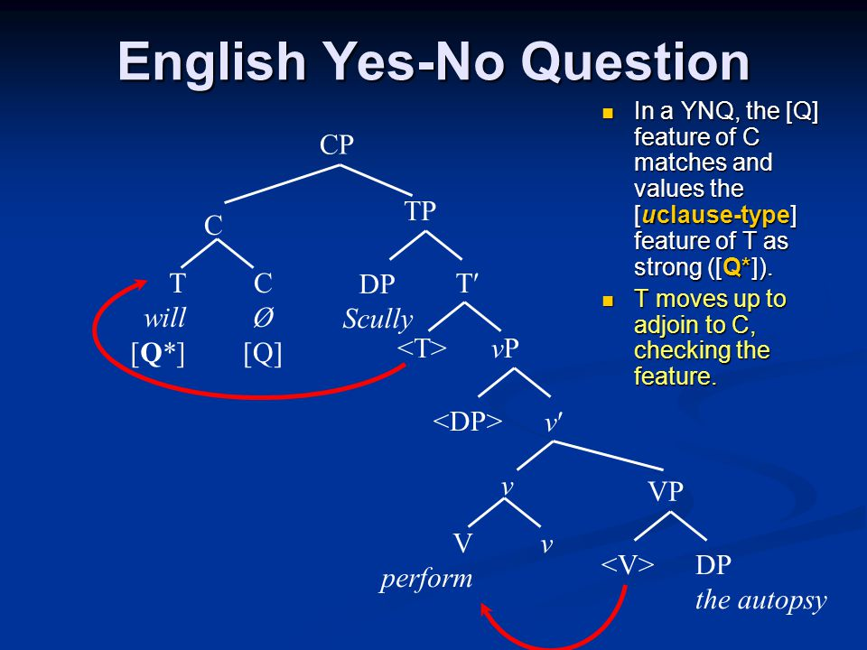 English Yes-No Question In a YNQ, the [Q] feature of C matches and values the [uclause-type] feature of T as strong ([Q*]).