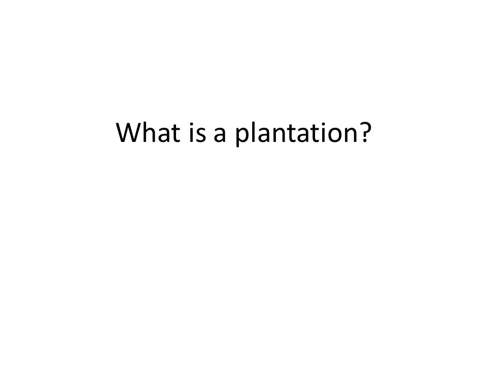 What is a plantation