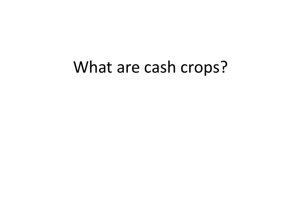 What are cash crops