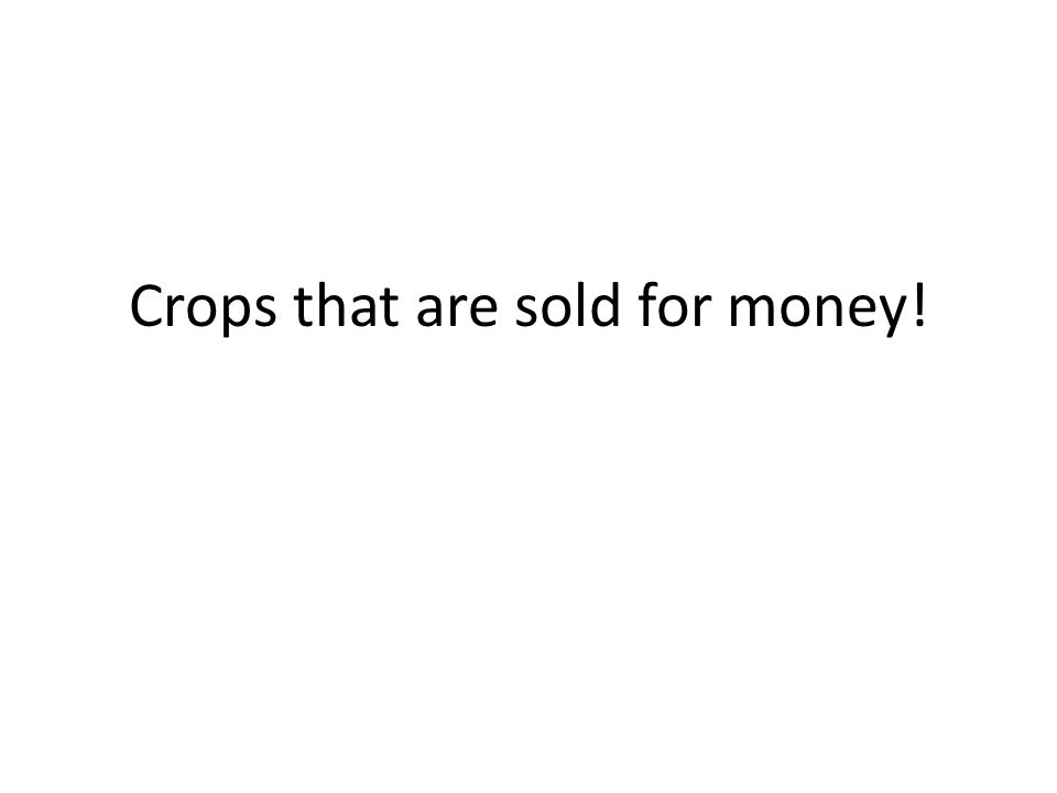 Crops that are sold for money!