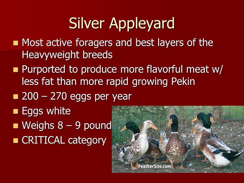 Ducks, Ducks, Ducks Marjorie Bender American Livestock Breeds