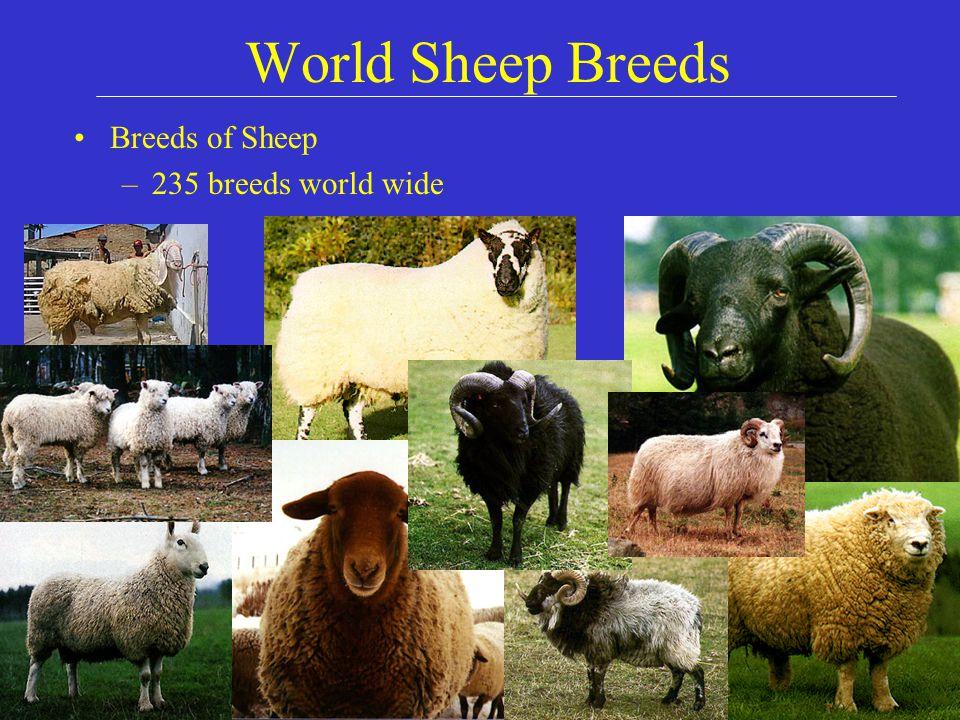 U S  Sheep and Goat Breeds  World Sheep Breeds Breeds of