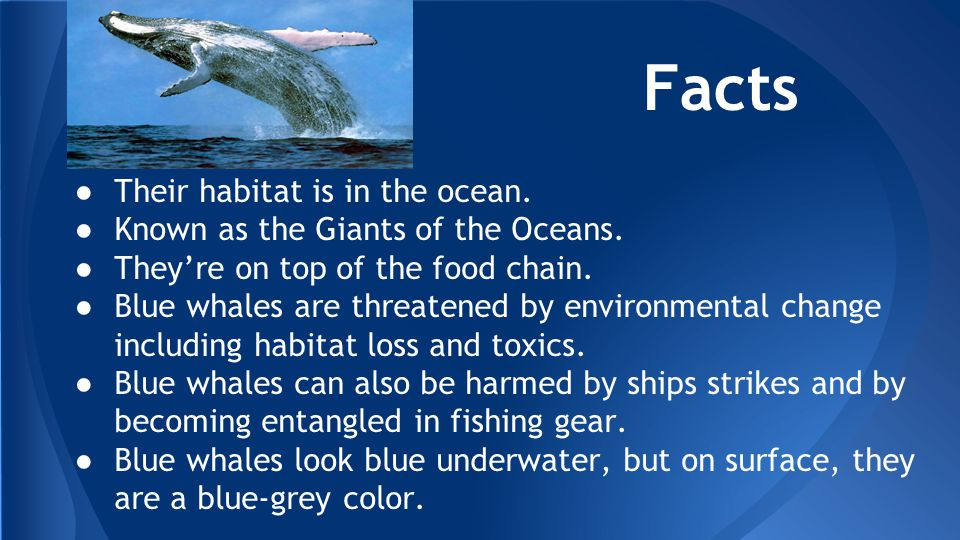 The Blue Whale By: Tasnim Hamad & Kalani Perry period: ppt