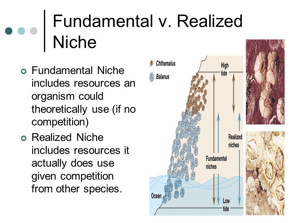 fundamental vs realized niche
