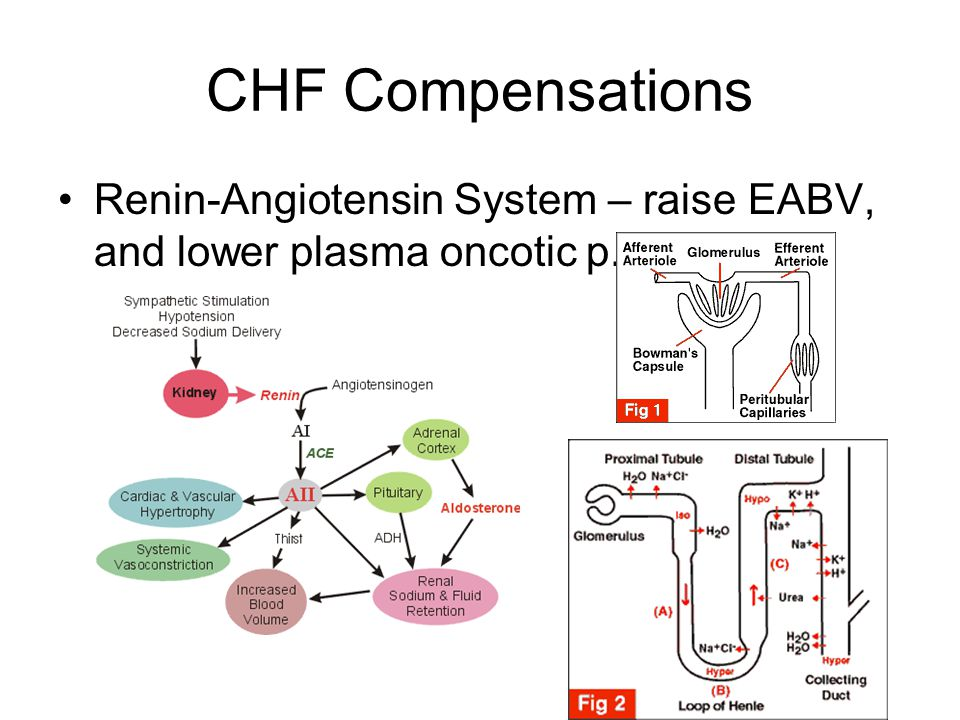 CHF Compensations Renin-Angiotensin System – raise EABV, and lower plasma oncotic p.