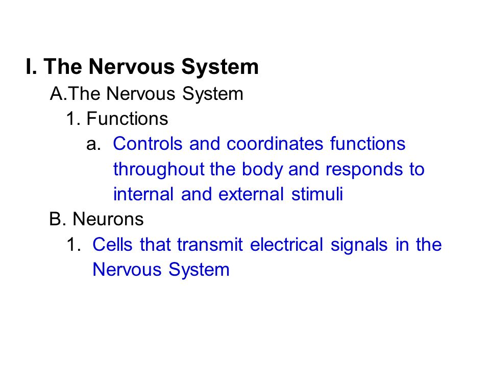 I. The Nervous System A.The Nervous System 1. Functions a.