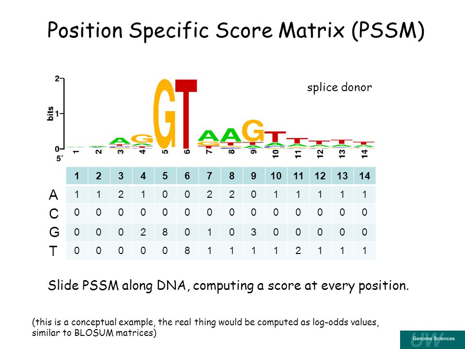 Position Specific Score Matrix (PSSM) ACGTACGT Slide PSSM along DNA, computing a score at every position.