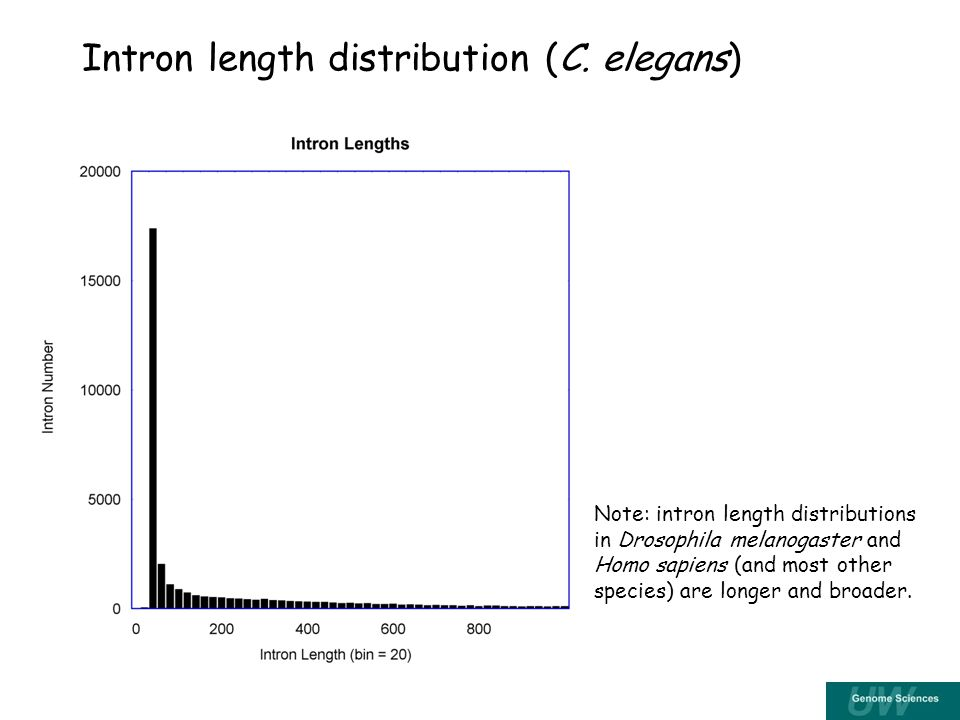 Intron length distribution (C.