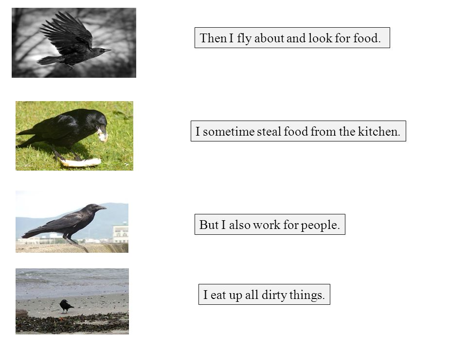 Then I fly about and look for food. I sometime steal food from the kitchen.